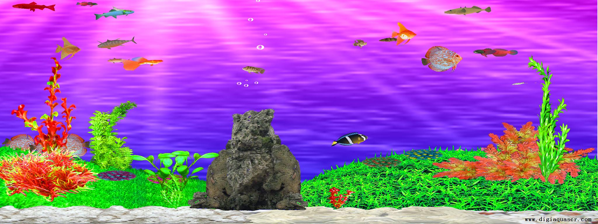 Screensavers january 2013 for Fish tank screen