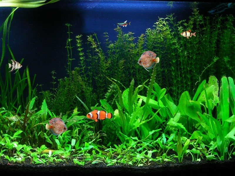 linux screen savers nature free aquarium fish screensaver 3 0