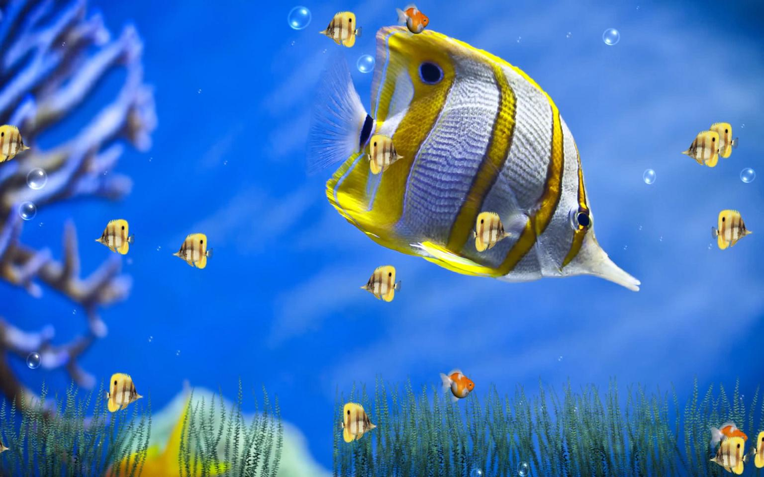 Marine Life Aquarium Animated Wallpaper 1.0